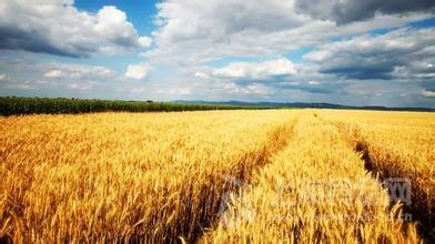 研究:全球变暖对农作物产量影响复杂